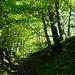 lauschige Waldpassage ...