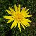 ... und eine weitere Blumenschönheit