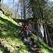 abschnittweise leicht ruppiger Abstieg im Stockwald