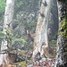 geht hinter den nächsten Baum und lugt hervor, um anschließend zu verschwinden. Genug der Fotos.