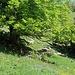 Im Aufstieg zur l'Ombriau.