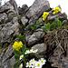 Blumenpracht am Grat