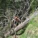 In un paio di punti gli alberi caduti costringono a qualche acrobazia.