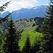 nun geht es durch den Wald zur Alphütte bei Grossbetten und hinauf zum Nusshaldensattel