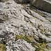 Dieses Seil führt zum Bänklein hinauf und markiert den Einstieg zum Tomlishorn SW-Grat. Da das Seil einen etwas morschen Eindruck macht, habe ich die Stufe ohne dessen Hilfe erklommen.