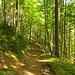 Durch schönen Wald
