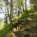 Häufig geht es auf erdigen Weglein durch den Wald. Die Flanken sind zum Teil recht steil.