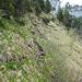 Eine kurze Querung leitet zum Steilstück mit dem dicken Drahtseil. In Originalgrösse ist das Seil zu erkennen.