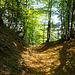Soeben eingetaucht in den Wald, und bei der Mulde angelangt, die den Einstieg markiert.