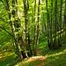 Wunderschöne Atmosphäre im Wald. Die Wanderwege an der Rigi Hochflue waren heute sehr gut frequentiert. Umso mehr fällt uns die plötzliche Einsamkeit und Abgeschiedenheit auf.