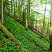 Der üppig grüne Waldboden ist zum Teil ziemlich rutschig