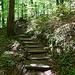 Stimmungsvoller Aufstieg im Wald.
