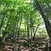Am obersten Weidezipfel über den Hütten bei Ober Herberig steche ich in den Wald.
