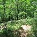 Vom Holzgeländer erkennt man nach ungefähr 370 m auf der Talseite den lichten Flaumeichenwald, in dem der Diptam wächst.