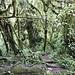 Der erste Tag geht durch dichten Regenwald