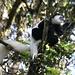 Auf den letzten Metern zum Mweka Gate sind noch ein paar Affen über uns rumgeturnt