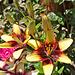 Blüte in Orlandos Garten