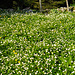 Blumenpracht bei der Holzegg