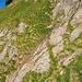 Über dieses Grasbändchen lässt sich die Runse bequem queren. Danach sollte man eher leicht nach oben halten, um auf die Wegspur in der Wiese zu gelangen.