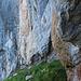 Nun geht es der Felswand vom Wyss Nollen entlang an dessen tiefsten Punkt, wo sich das Nollenbrünneli befindet.
