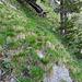Nach dieser kleinen Traverse und einem steilen Stück durch Gras ist der Beginn vom Rot Grätli bald erreicht