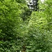 Vegetation Tössstock