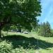 unter dem Baum fanden wir zwischenzeitlich Schatten, dahinter Matt (1071 m)