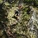 steiler Abstieg von der Fortifikation West
