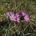 Bergfrühling, so schön aber viel zu schnell wieder vorbei / tanta bella la primavera in montagna, ma troppo presto passata di nuovo