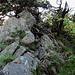 Auf dem Hoch-Alpinen Gratweg (Man klettert hier auf der rechten Seite des Grates über die Wurzeln hoch).