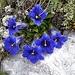 herrlicher Einblick in die Blumenwelt ...