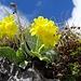 zurück in der famosen Blumenwelt 1