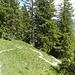 Bequemer Abstieg im Wald, durch Südlage trotzdem schweißtreibend