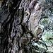 Schale des Baumes I