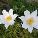 erste Sonnenstrahlen treffen auf liebliche Frühlingsblumen