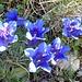 Fortsetzung der Blumenpracht 4 - mit weiteren der edlen ...