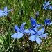 Fortsetzung der Blumenpracht 2