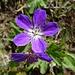 Blumenpracht 5