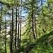 Fra gli alberi si intravedono le montagne.