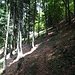 hübscher Anstieg im Wald