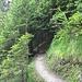 auf und ab im Wald