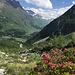 Alpenrosen und ein Blick in Richtung Grosser Sankt Bernhard