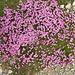 Die Wiesen sind regelrecht mit Blumen übersät.
