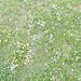 Ein bunter Teppich aus kleinen Blumen überzieht das Gelände.