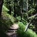 Je länger je froher um schattige Waldstücke.