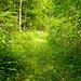 Nach den Häusern bei Büel wird dieser breite überwachsene Weg am Rand des Baches erreicht. In Originalgrösse ist hinter einigen Blättern bereits der Wegweiser zu erkennen, wo der Weg nach rechts abzweigt, um nach Oberebnet zu gelangen.