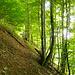 Durch Wald und Wiesen geht es Oberebnet entgegen. Der Pfad ist wenig markiert und an einigen Stellen nur schwach zu erkennen.