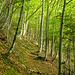 Schöner Waldabschnitt