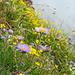 ... und Blumen auf dem Felskopf