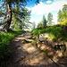 Sentiero verso la Capanna Piansecco